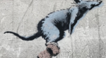 Visite guidée : Street-art à Montmartre La Cachette de Paris