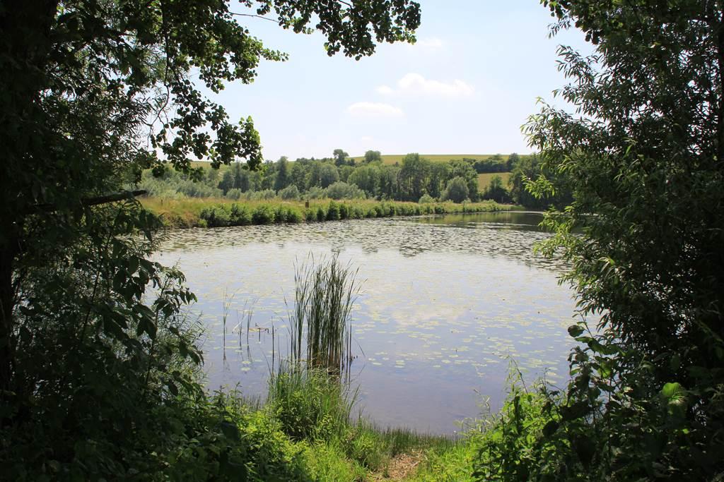 Découverte de la faune et de la flore du Vieil Etang en famille 2021-07-07 Bairon et ses environs