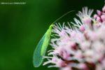 Initiation à la reconnaissance des insectes Maison Paris Nature