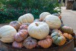 Splendeurs d'automne au Domaine de Chaumont-sur-Loire Chaumont-sur-Loire