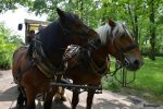 Chevaux de trait Maison Paris Nature