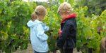 Journée Vacances : Ceps de vignes et pins des Landes Cadillac