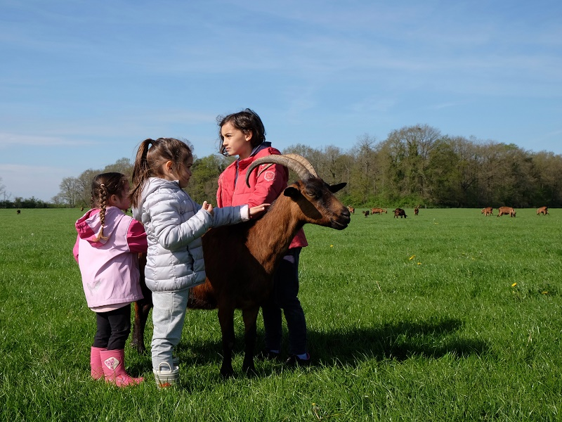 Atelier découverte : Les animaux de la ferme Sepmes