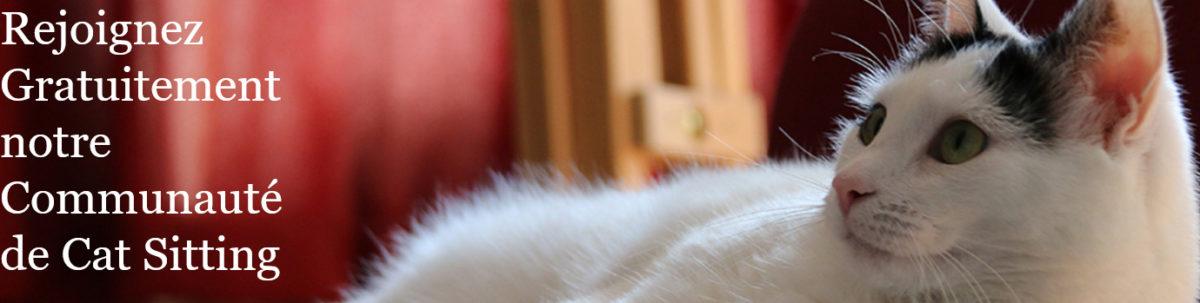 Cat in a flat, site de cat sitting