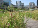 Comment favoriser la biodiversité dans le jardin ? Maison du Jardinage - Pôle ressource Jardinage Urbain Paris