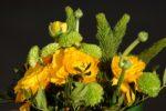 Cours d'art floral Lorris