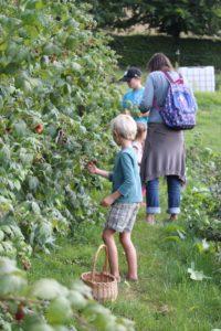 Cueillette de fruits rouges Livarot-Pays-d'Auge
