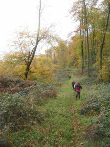 Randonnée pédestre en forêt de Retz Villers-Cotterêts