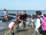 Balade découverte littorale à Saint-Aubin-sur-Mer Saint-Aubin-sur-Mer