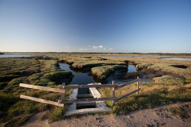Découverte de la baie de Lanton Audenge