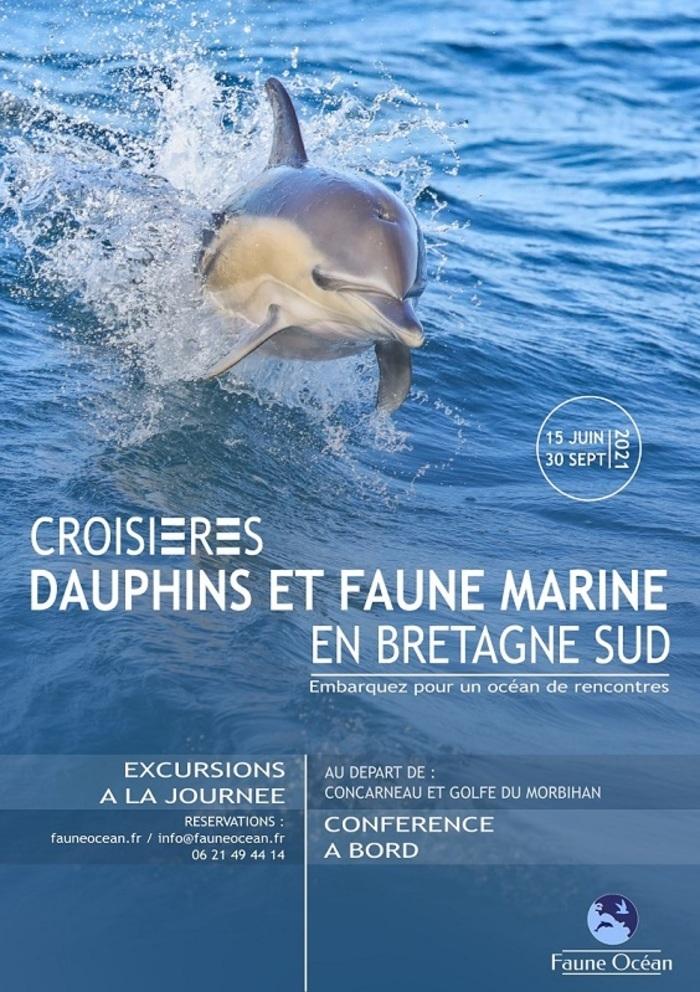 Croisière Dauphins et Faune marine de Bretagne Embarcadère du Guilvin Locmariaquer