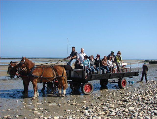 Les parcs à huîtres de la Baie des Veys au rythme des chevaux Grandcamp-Maisy