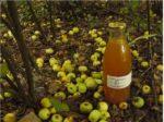 Des fruits au jus Belin-Béliet   2021-09-25