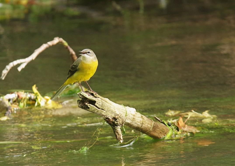 Exposition avec le Festival de l'oiseau : Changement climatique et biodiversité Abbeville