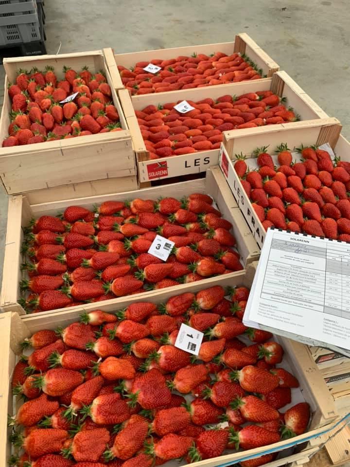 fraise chavagne