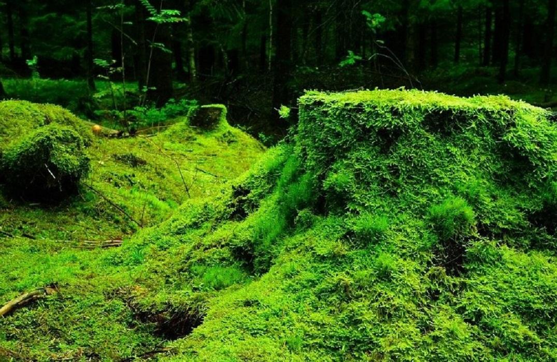 La biodiversité et la gestion forestière 09/05/2021 Crécy-en-Ponthieu