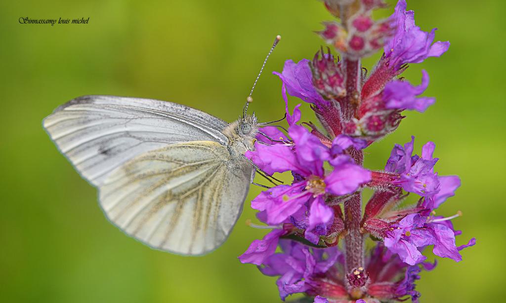 L'Atlas des papillons de Paris Maison Paris Nature Paris