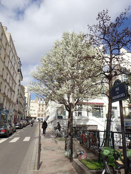 Les arbres des rues à Paris Maison Paris Nature Paris