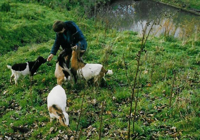 Promenade champêtre avec la chèvre Sybelle Livarot-Pays-d'Auge