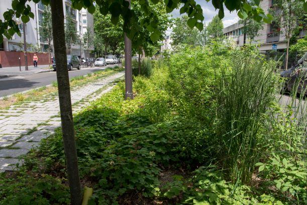 Végétalisation des rues à Paris Maison du Jardinage - Pôle ressource Jardinage Urbain Paris