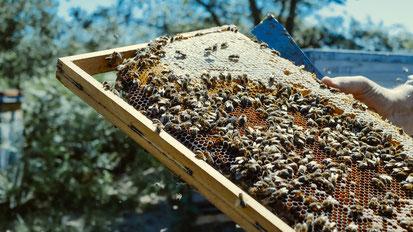 Chasse au trésor et découverte d'une ruche d'abeilles avec une apicultrice Pontenx-les-Forges