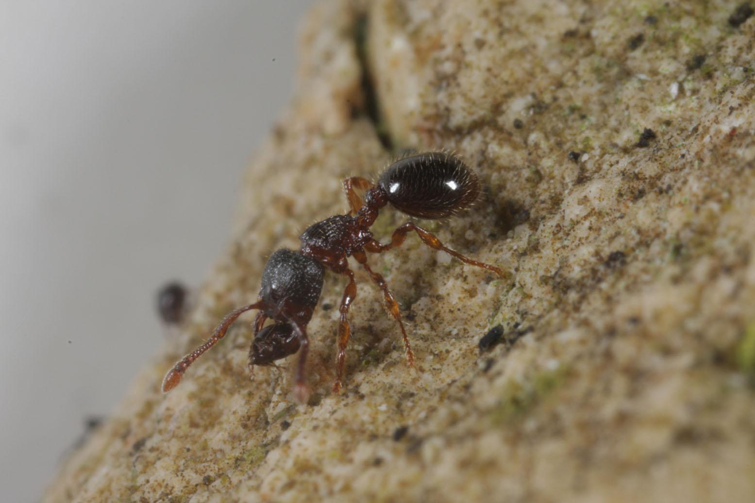 Comment vivre en ville quand on est une fourmi ? Parc de Bercy Paris