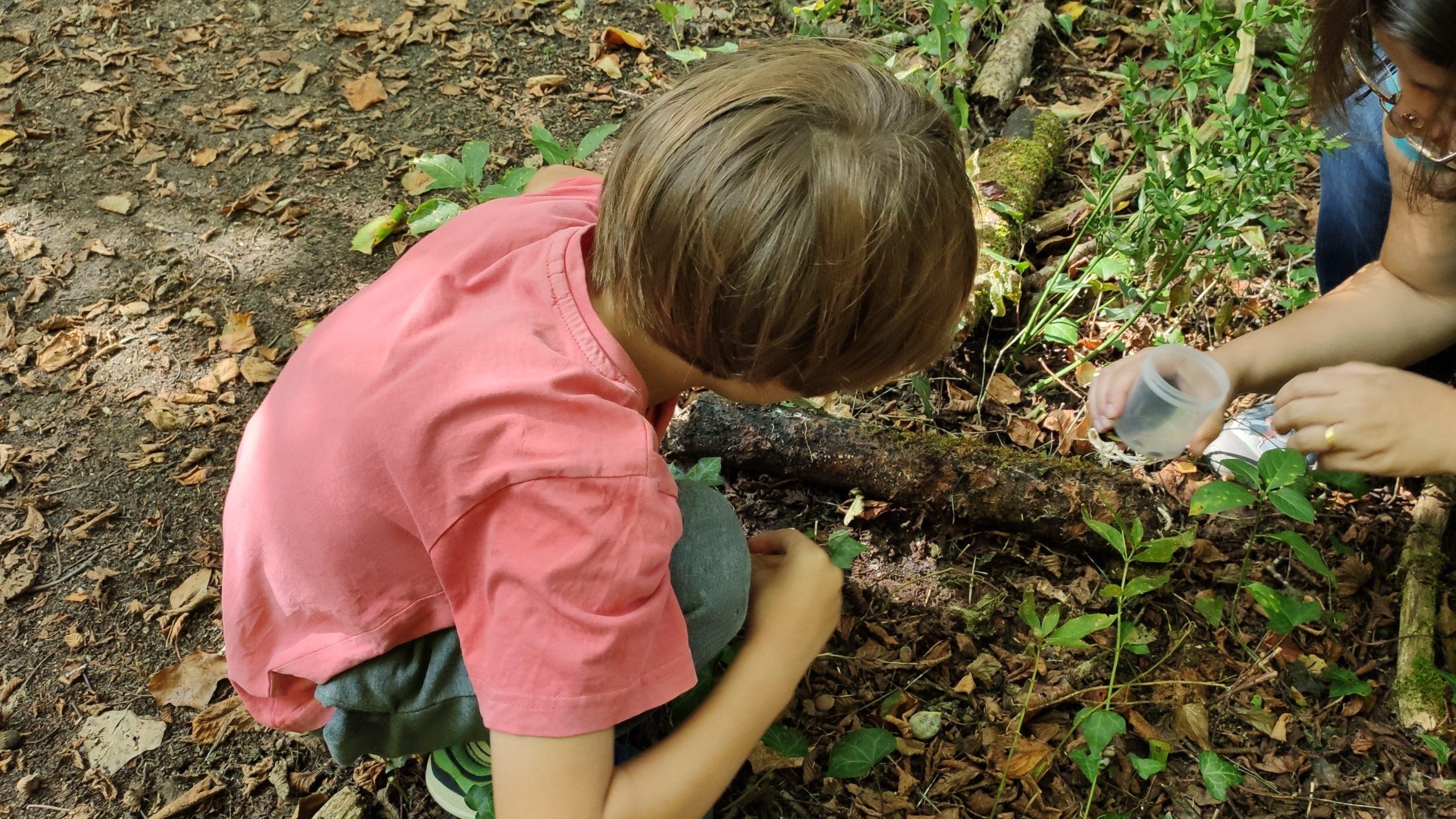 Les ateliers de la forêt Saucats