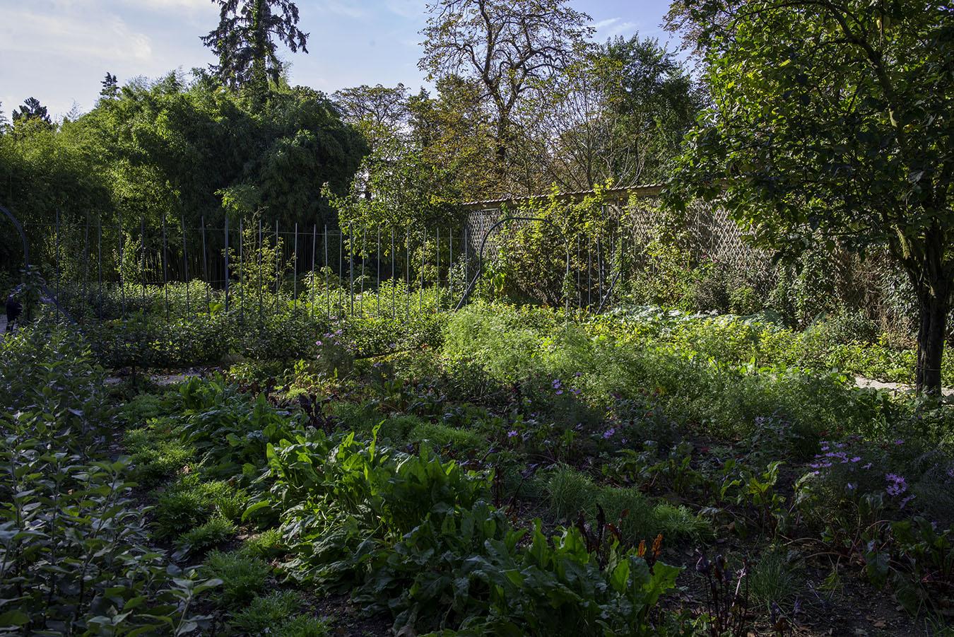 Les plantes potagères du parc de Bagatelle Parc de Bagatelle Paris