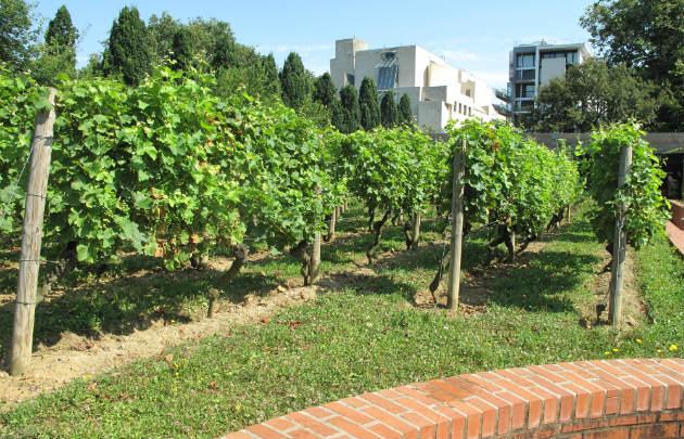 Les potagers et les vignes à Paris Maison du Jardinage - Pôle ressource Jardinage Urbain Paris