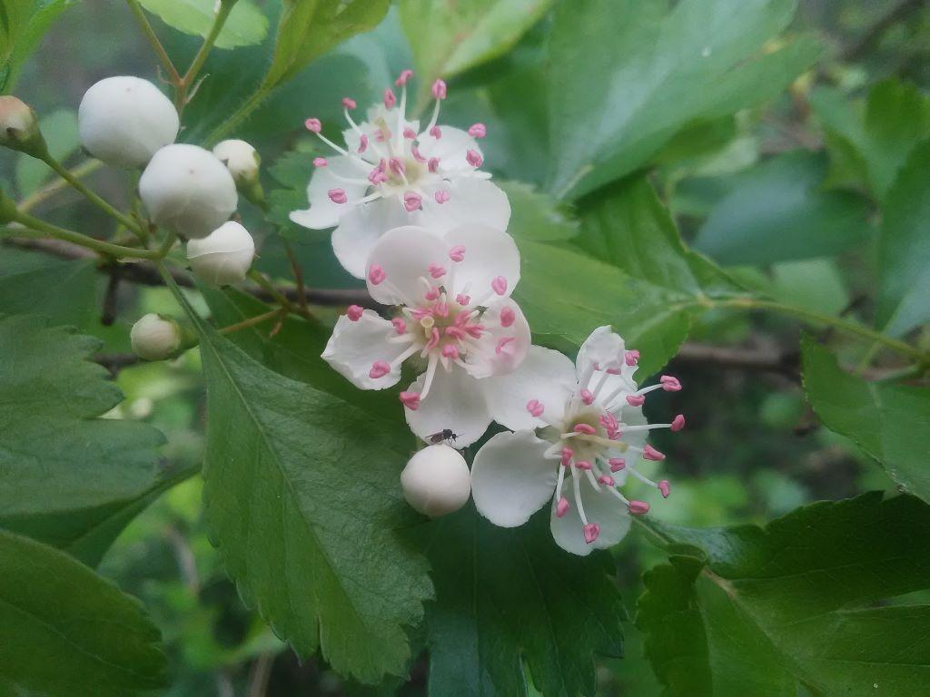 Sortie Botanique: Le Nom des Fleurs Cajarc