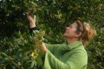 Sortie découverte des plantes sauvages