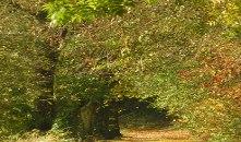 Arboretum forestier des Deux-Sèvres