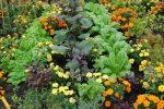 Association de cultures au potager Maison du Jardinage - Pôle ressource Jardinage Urbain Paris
