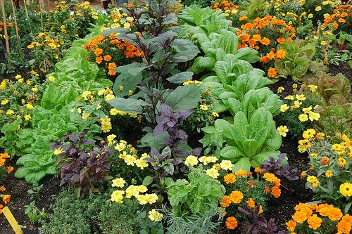 Association de cultures au potager Maison du Jardinage – Pôle ressource Jardinage Urbain