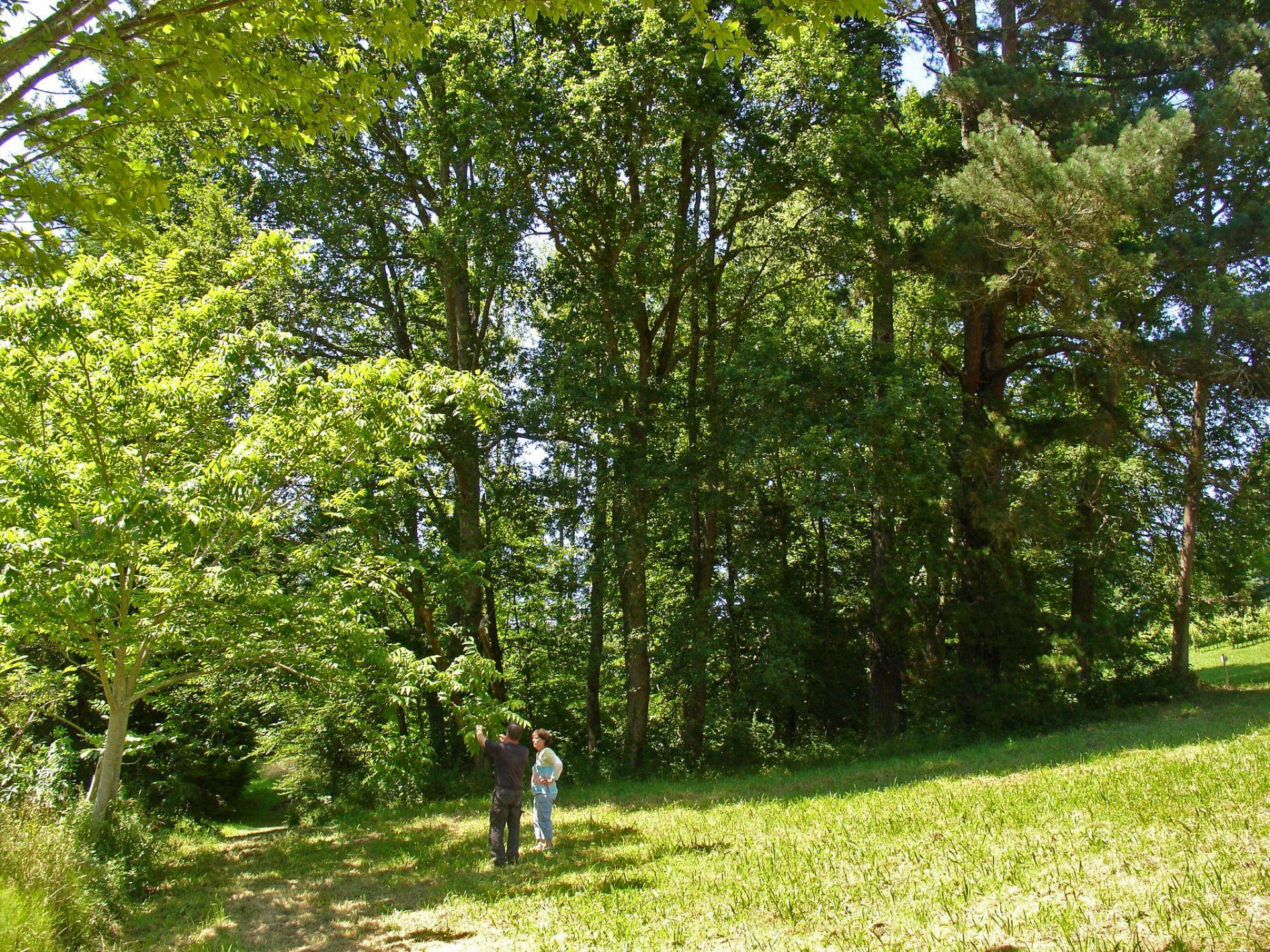 L'Arboretum de Payssas Lasseube