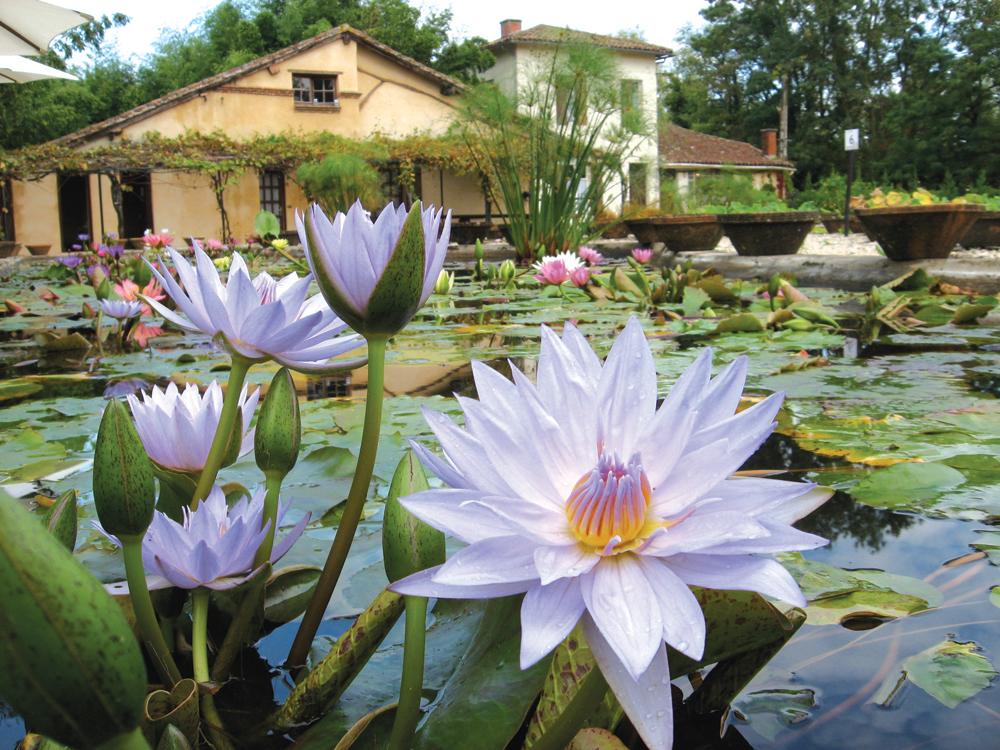 Le Jardin des Nénuphars Latour-Marliac Le Temple-sur-Lot