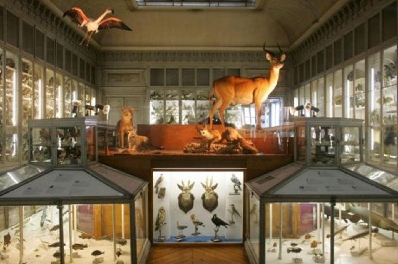 Museum d'histoire naturelle Bayonne