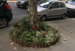 Plantations en pieds d'arbres Maison du Jardinage - Pôle ressource Jardinage Urbain Paris