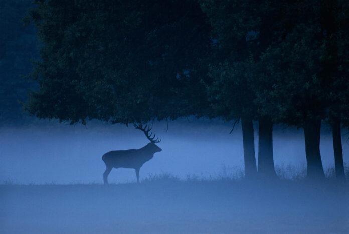 tombées nuit rennes