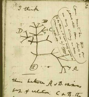 arbre phylogénétique darwin