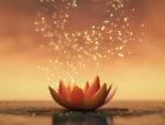 Atelier Zen :  Les émotions