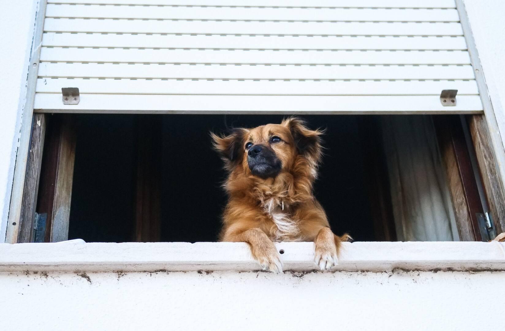 ANIMAL DANS LA VILLE : LA CHARTE RENNAISE