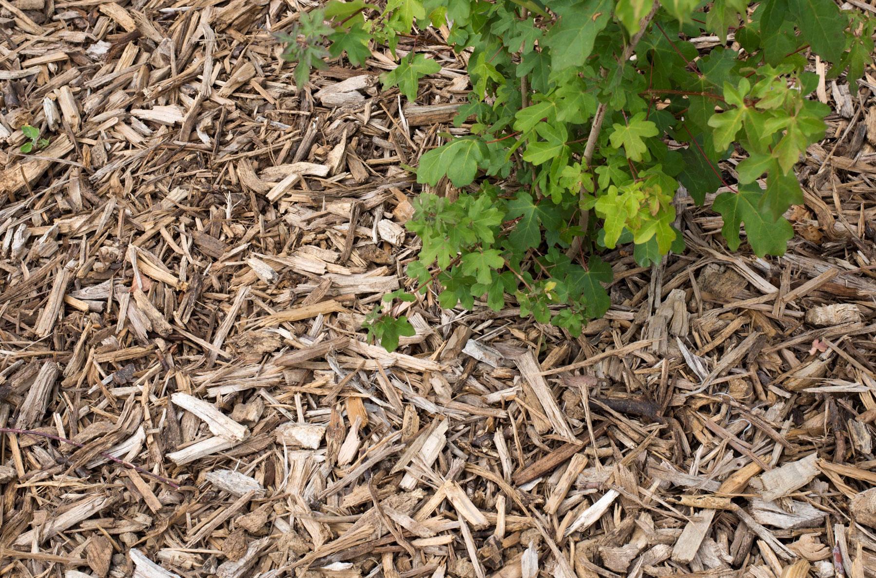Gérer le potager en été Maison du Jardinage – Pôle ressource Jardinage Urbain