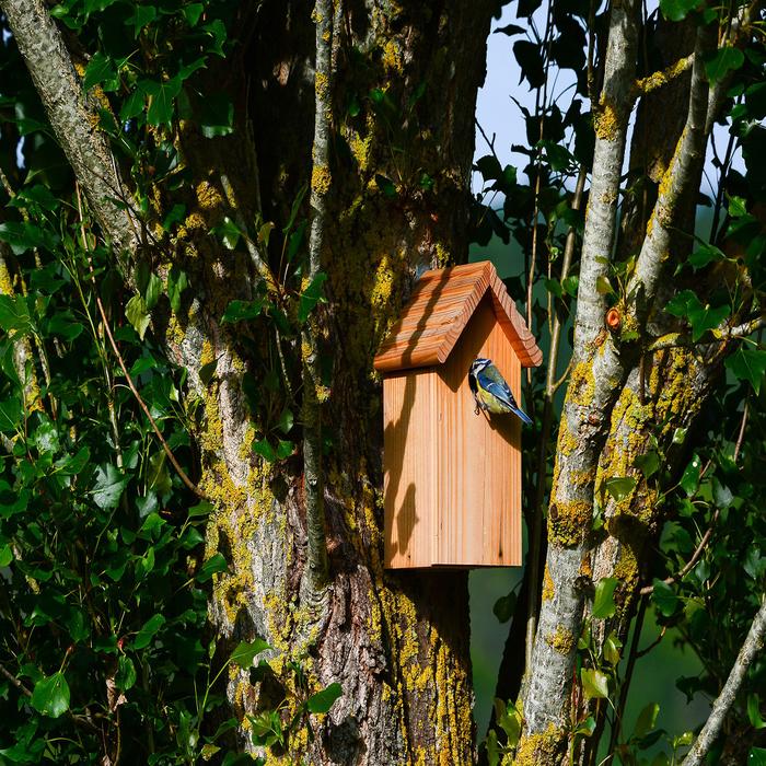 Balade estivale, fabrication de nichoirs à oiseaux Ille et Vilaine, Chemin Robert de Boron Rennes