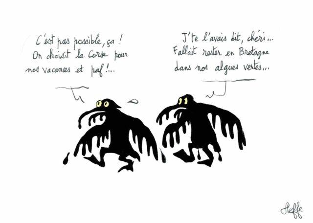 maree noire corse