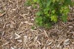 Paillage d'été Maison du Jardinage - Pôle ressource Jardinage Urbain Paris
