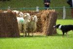 Soirée pastorale et souper du berger Aramits   2021-08-05