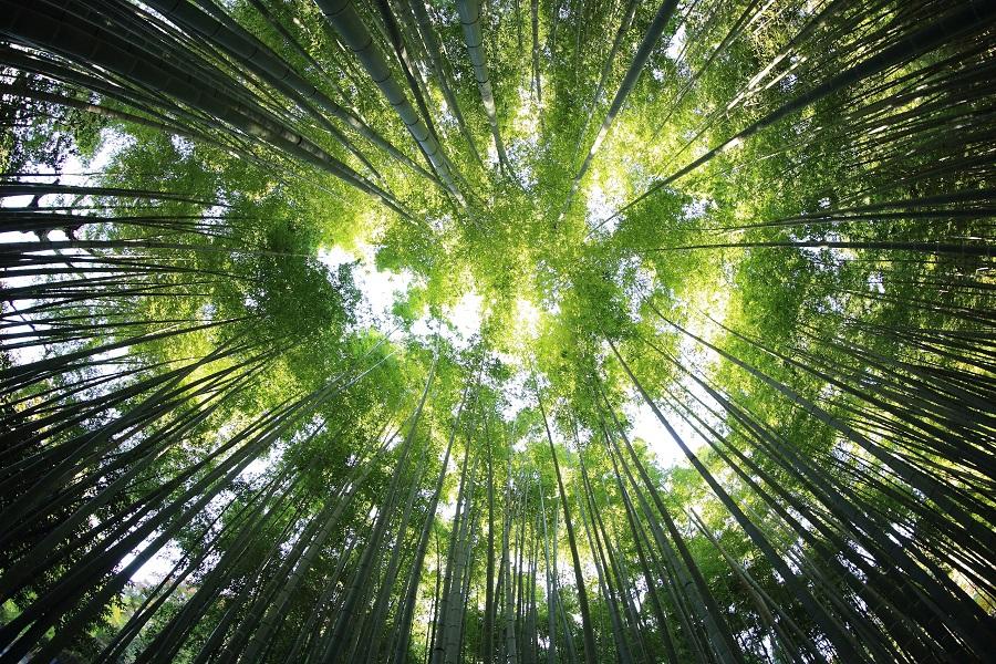 Bain de forêt Montsoué   2021-07-26