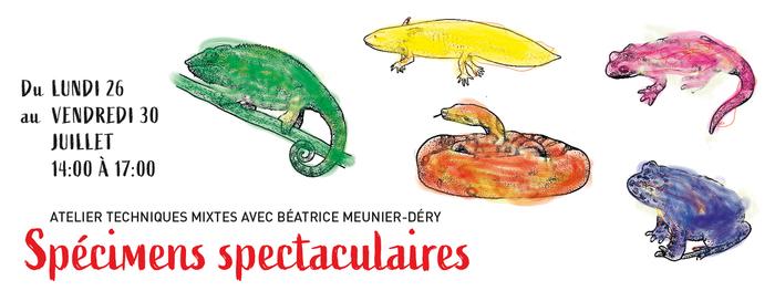 Spécimens spectaculaires | Ateliers créatifs avec Béatrice Meunier-Déry Bureau d'Art et de Recherche | Qsp galerie Roubaix