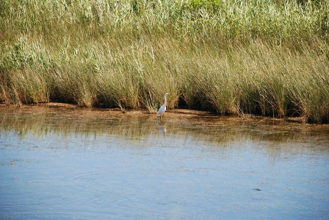 Découvrir les oiseaux du Bassin La Teste-de-Buch